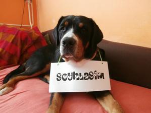 A vedle ní bude nápis v rámečku: Vše co potřebujete k životu je láska.....a pes - což je svatá pravda!!!