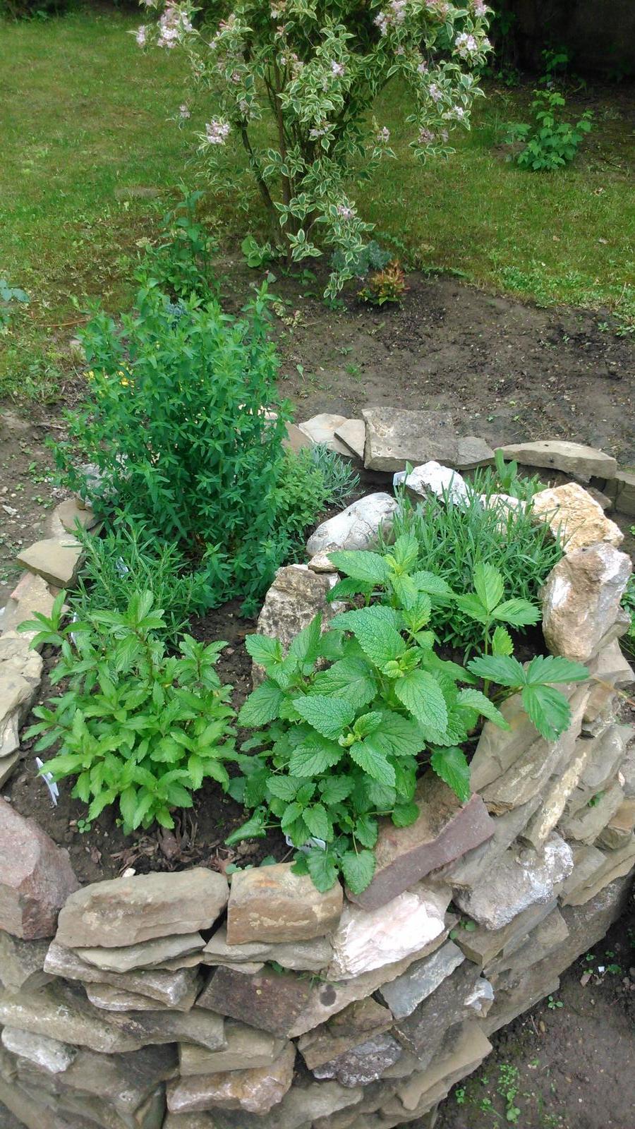 Záhradka a bylinková špirála - moja uroda:-)