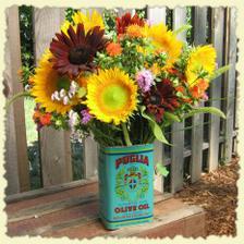 moje milované slunečnice