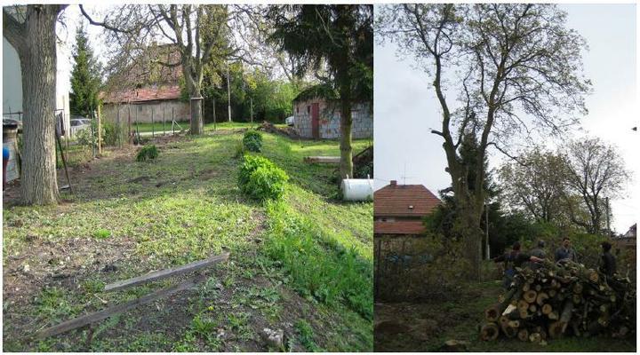 Krušné začátky - Ořech před a po, moc z něj nezbylo.. na podzim půjde dolů celý..