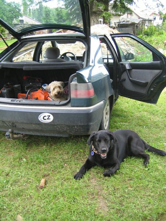 """Krušné začátky - Máme dva """"hlídače"""" - jeden schován v kufru auta kde si ustlal :-)"""