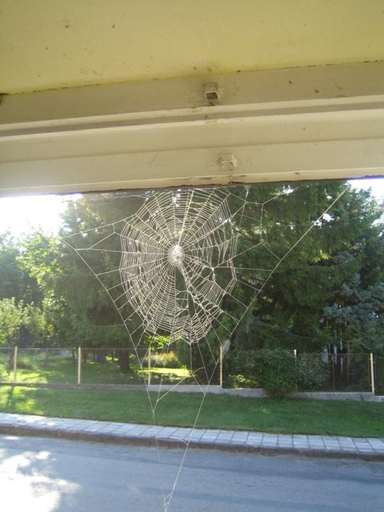 Krušné začátky - momentka po otevření okna na ulici :-)