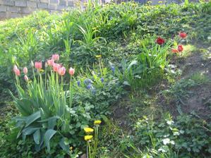 Rozkvetlá louka na zahradě