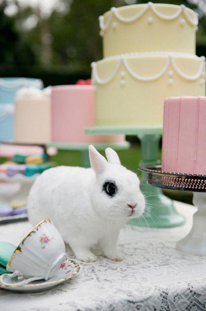 Milé nevesty, prežite krásne veľkonočné sviatky! :) To vám želám ja a celý tím Mojej svadby :) - Obrázok č. 1