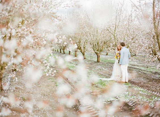 Svadba v ovocnom sade - Obrázok č. 5