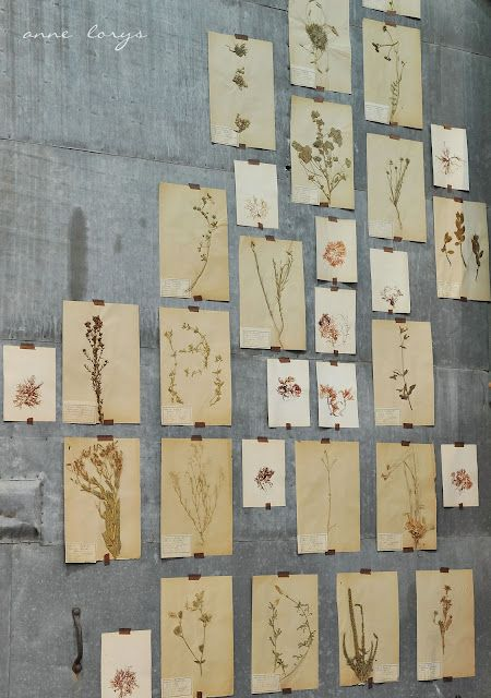 Inšpirované herbárom a botanickou záhradou - Obrázok č. 6