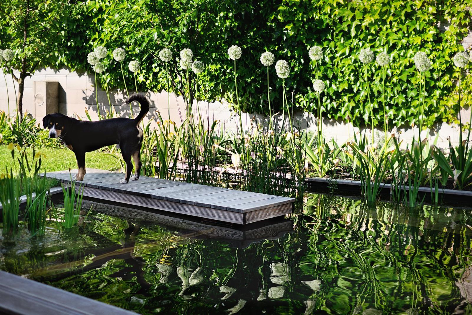 Ferdinandove záhrady - Obrázok č. 88
