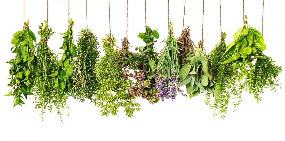 Bylinky, léčivé rostliny u nás doma........ - Fotografie skupiny