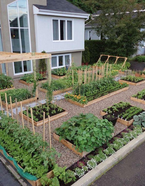 Vyvýšené záhony v našej záhrade - Fotka skupiny