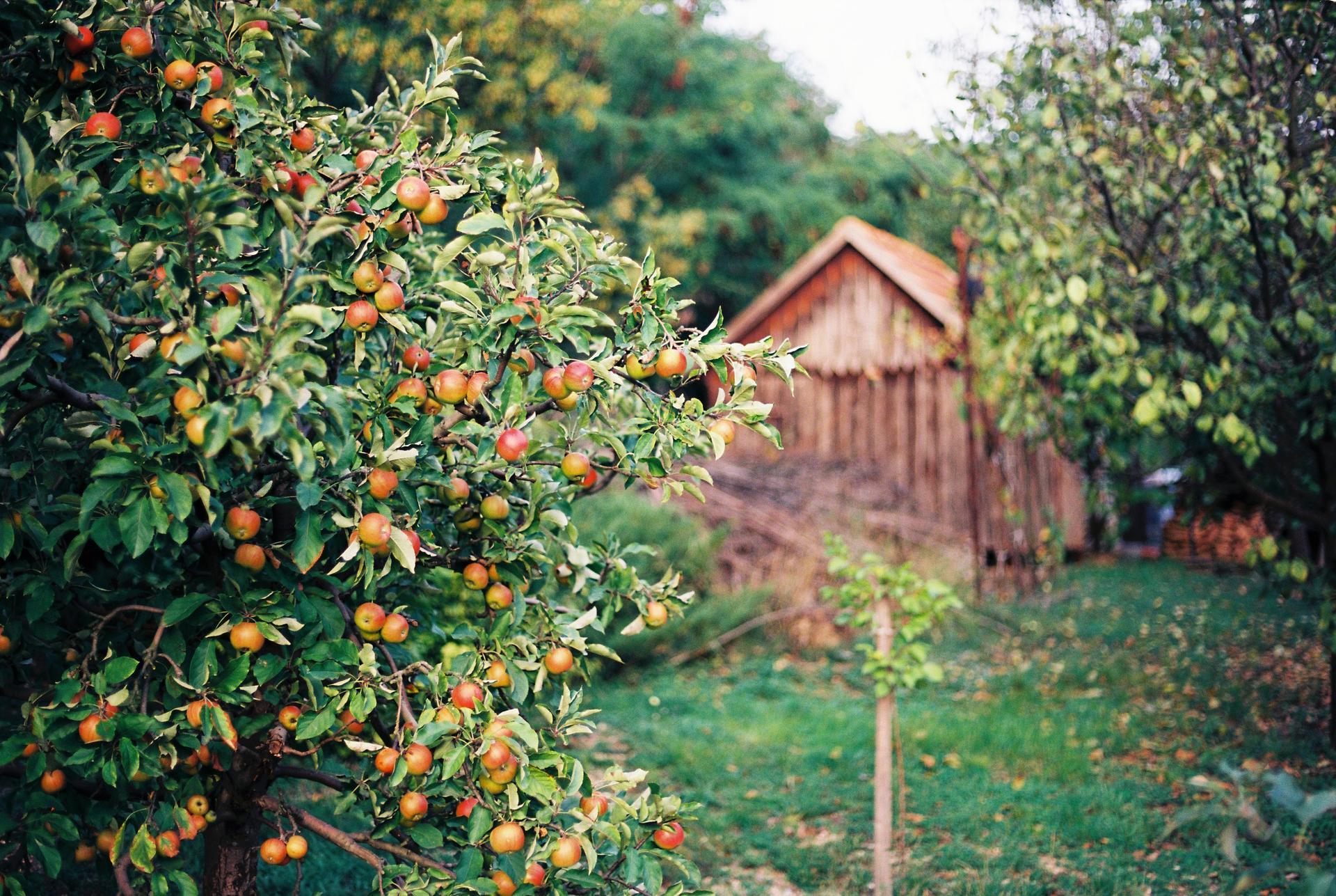 Záhrada u rodičov - Obrázok č. 13