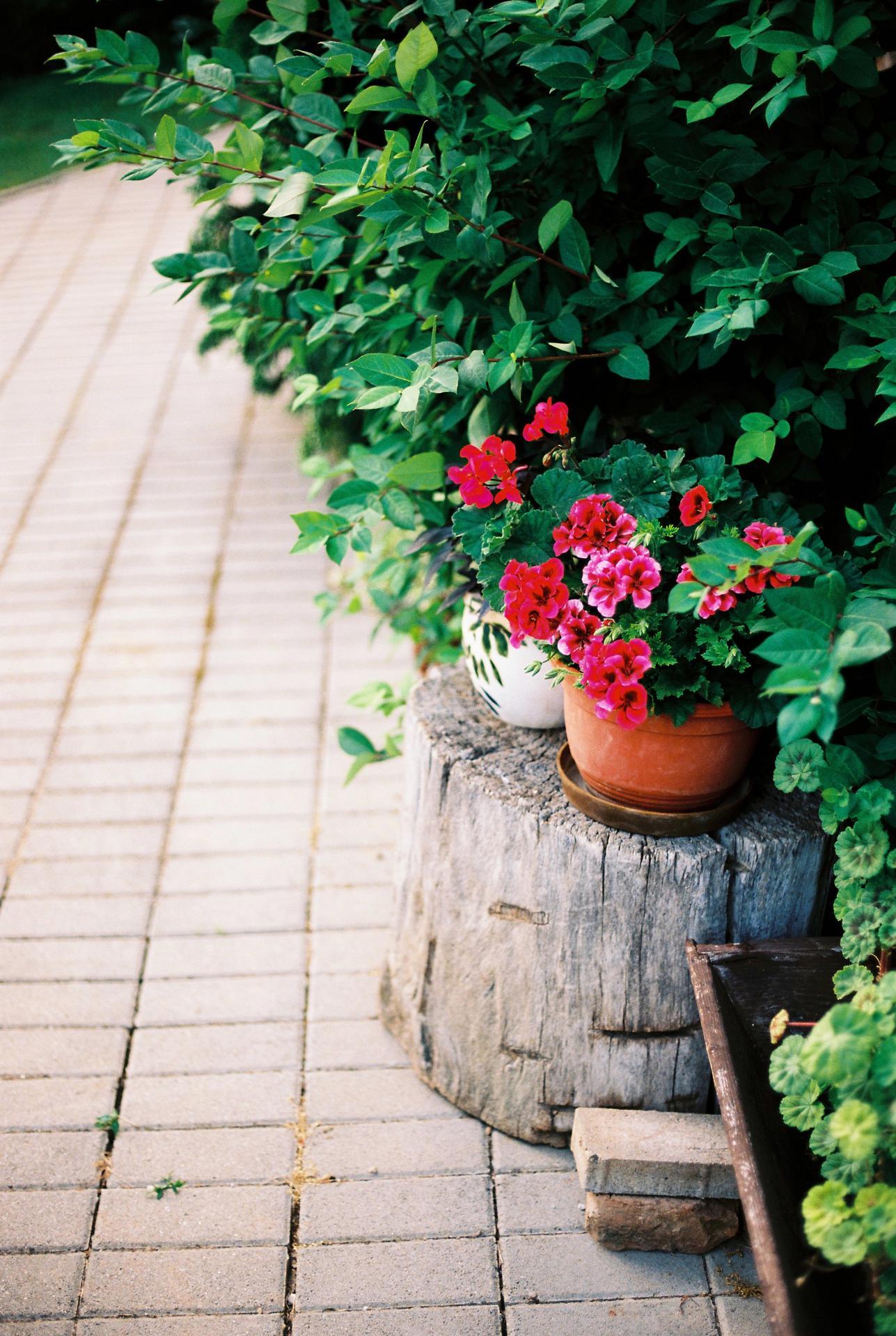 Záhrada u rodičov - Obrázok č. 23