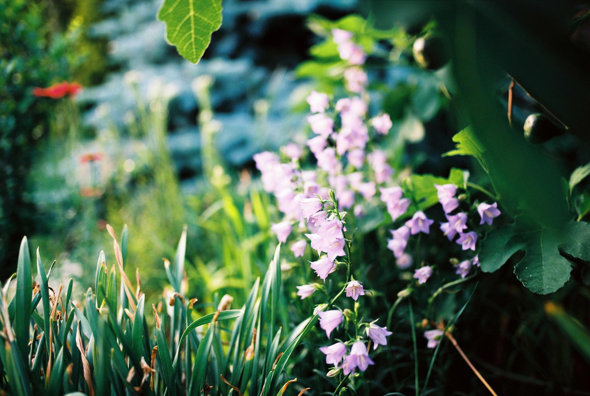 Záhrada u rodičov - Obrázok č. 26