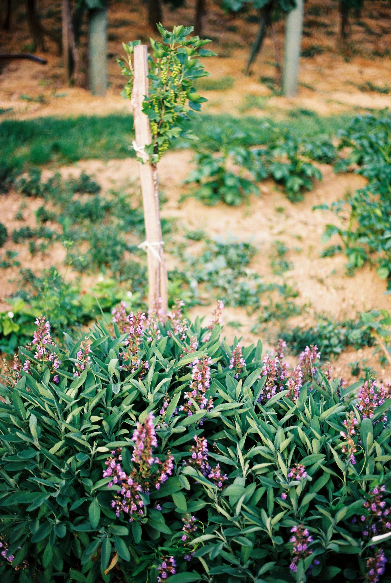 Záhrada u rodičov - Obrázok č. 22