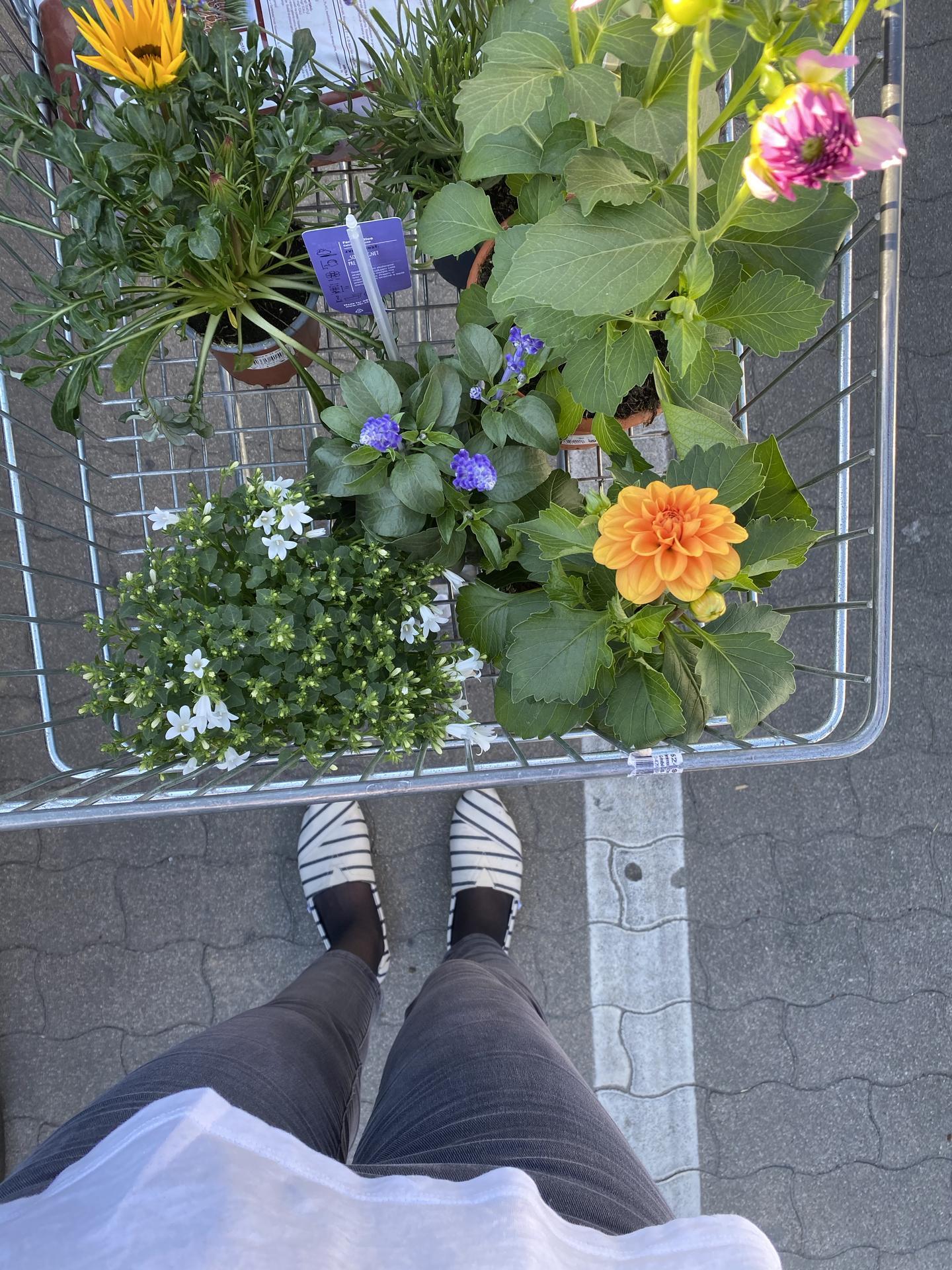 Plány na víkend sú jasné, popresádzať tieto nové prírastky na balkón :) priznám sa, že som nakupovala len pocitovo, bez toho, aby som si zisťovala, ktoré z týchto kvetov sú vhodné na balkón. Ale veď nejak začať treba a moje rajčiny si zaslúžia spoločnosť :) - Obrázok č. 1
