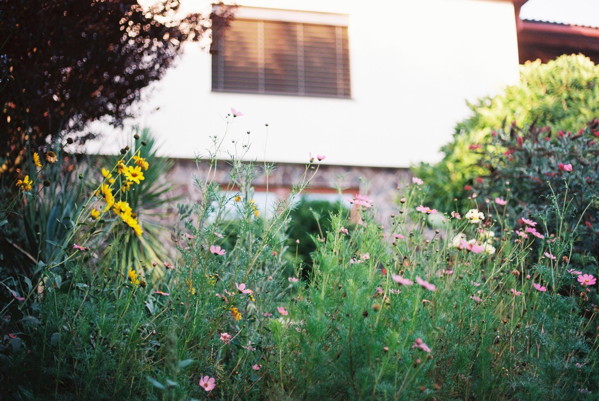 Záhrada u rodičov - Obrázok č. 56