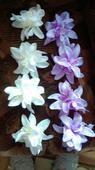 Fialové a krémové kvety,