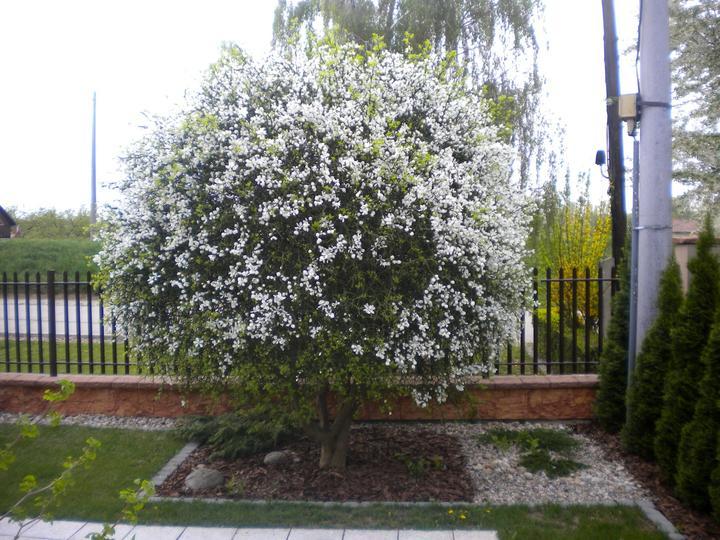 Jar 2012 v nasej zahradke - A uz kvitne...
