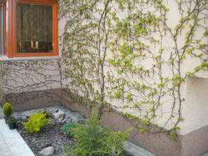 nove jarne listky pred kuchynskym oknom, pri ranajkach krasny vyhlad