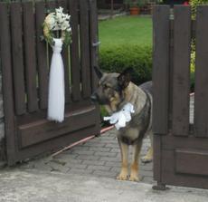 nas pes pocas svadby mojich sestier:)