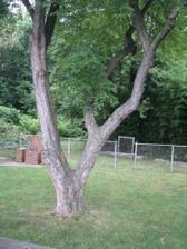 strom uprosted zahrady, potrebujeme nejakou houpacku :)