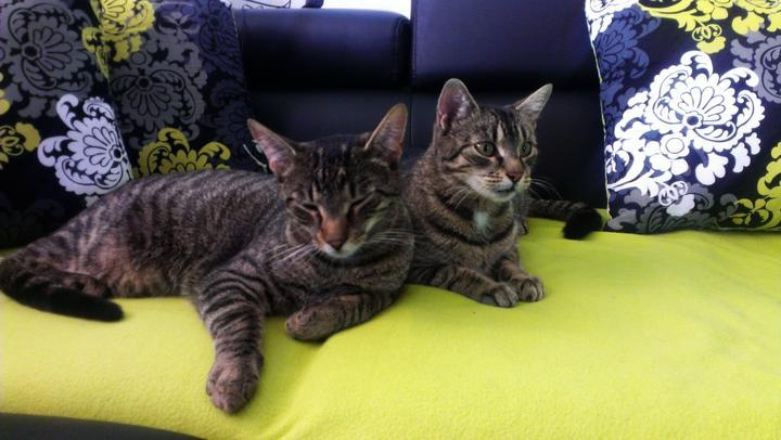 Hádajte - ktoré je kocúr a ktoré mačička :-)