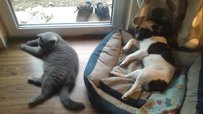 Theodor a Raily.... cize Tito a Rejlík :-)