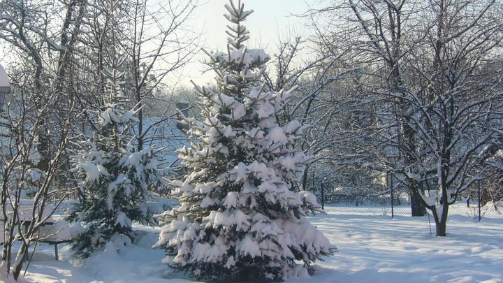 Vánoce 2010 - Obrázek č. 15