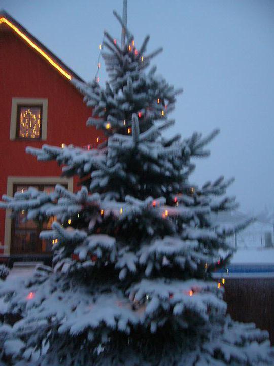 Vánoce 2010 - Obrázek č. 17