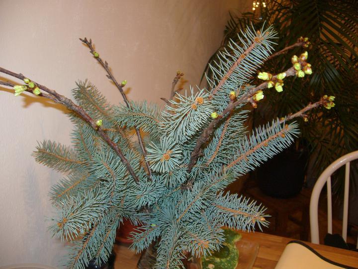 Vánoce 2010 - Barborka se chystá na květ