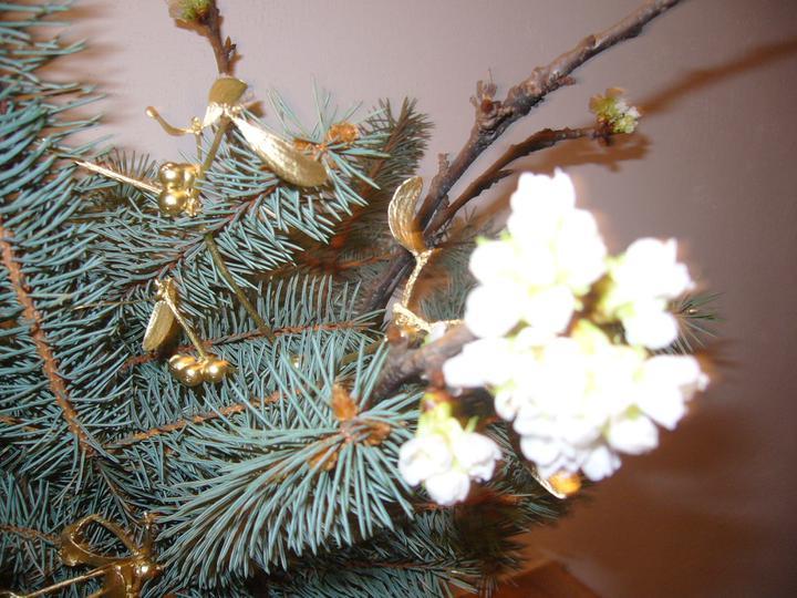 Vánoce 2010 - Barborka v plném květu