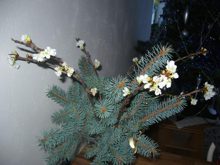 Vánoce 2010 - :-)