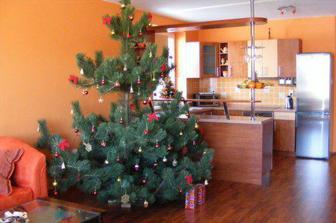 Prvé vianoce a náš najkrajší vianočný stromček, živýýýýýý (v šírke mal 2m)