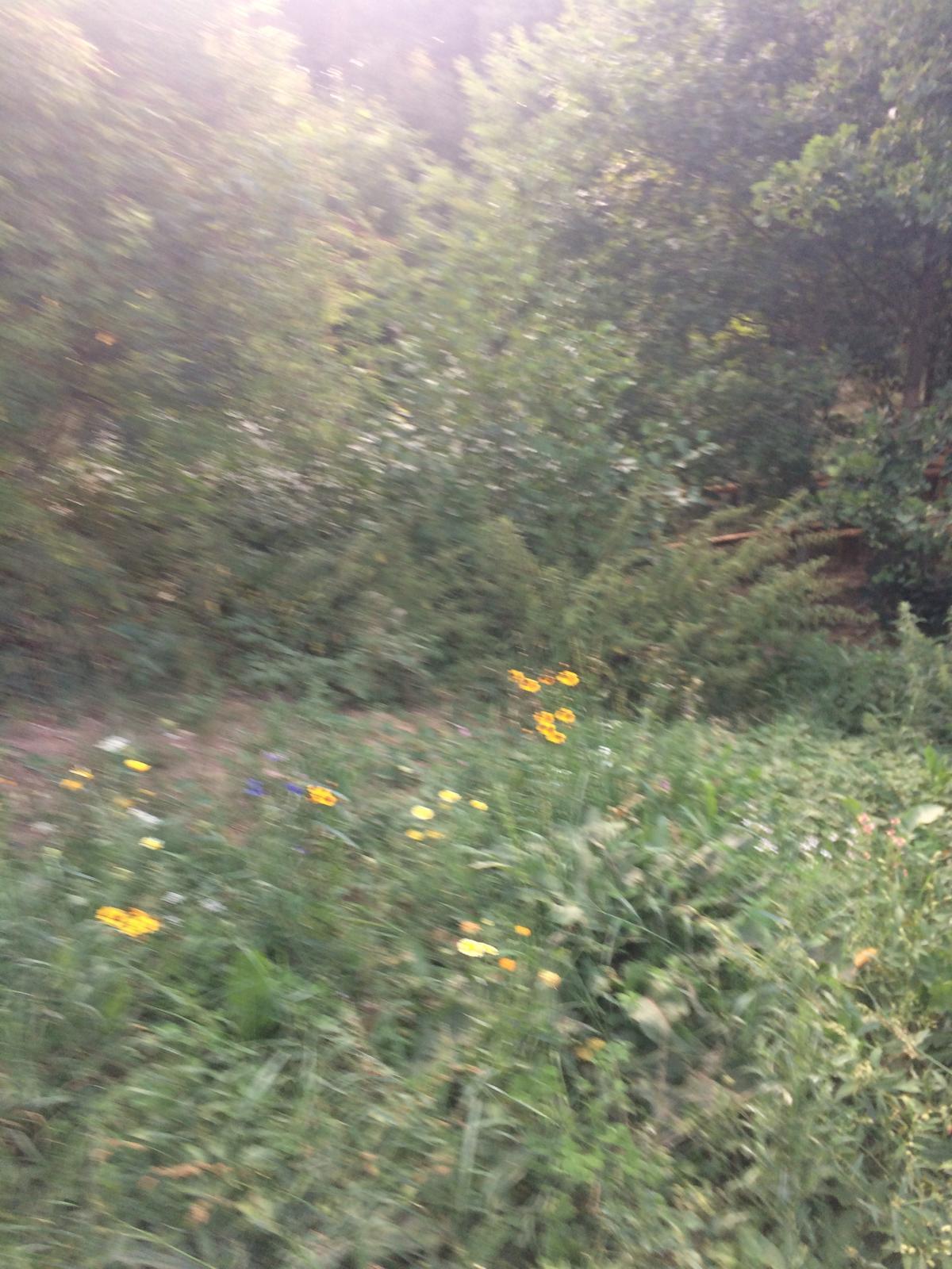 Lesopark ve městě - Anglicky trávník by k nam nešel ....