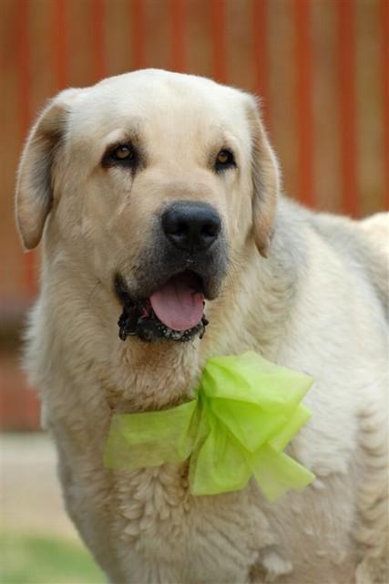 Príjemné svadobné starosti :-) - zlate, možno aj naše zvieratká dostanú niečo podobné...len či to nezničia hneď:-)