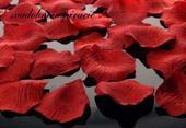 Lupienky ruží Bordové - 100 ks za 1 Eur,
