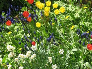 bývalý majitel měl rád cibuloviny, takže zahrada na jaře hýří barvami