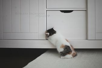 ked nejde suflik otvorit, mozno pojdu dvere :-)