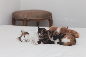 takto sa dnes ulozili na posteli zlaticka :-)
