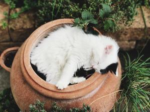Toto su susedinej macky maciatka.. ma ju od nas. Cize nasej Mischi vnucence 😍 Zajtra odchadza do noveho domova spolu s este jednou takouto istou laskou ❤️❤️❤️