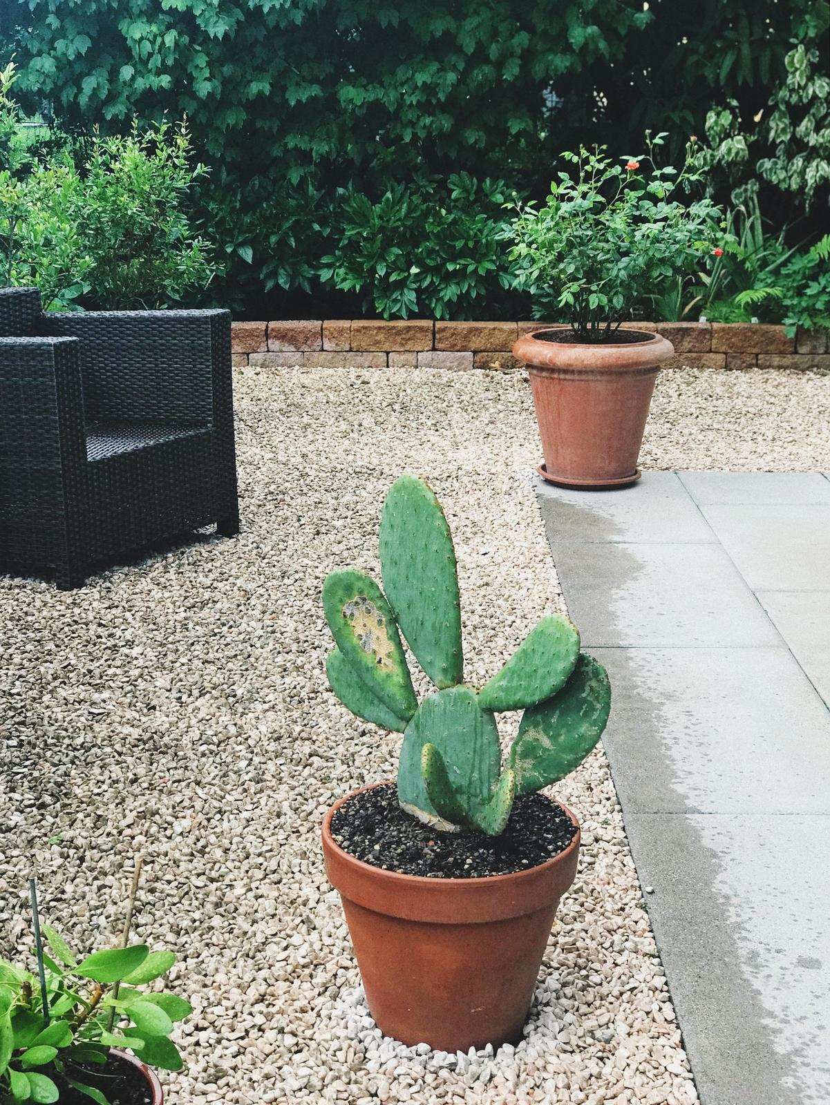 Terasa+ zahrada vzadu.. - Obrázok č. 4