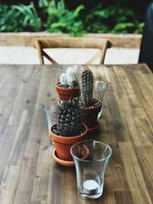 Kaktuse nesmu chybat 🤷🏼♀️