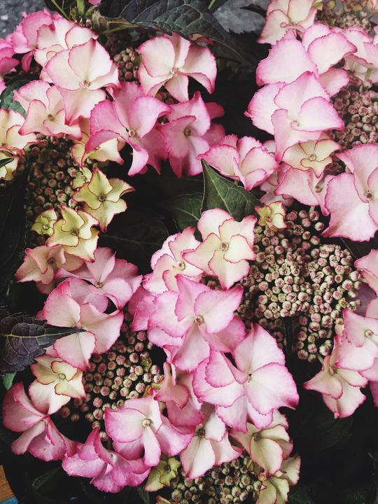 Tiffani rose