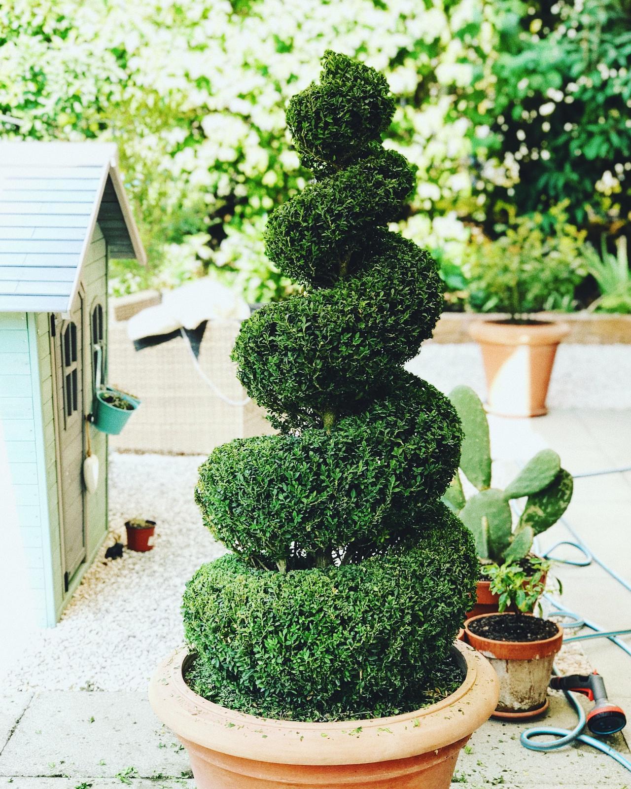 Terasa+ zahrada vzadu.. - Obrázok č. 18