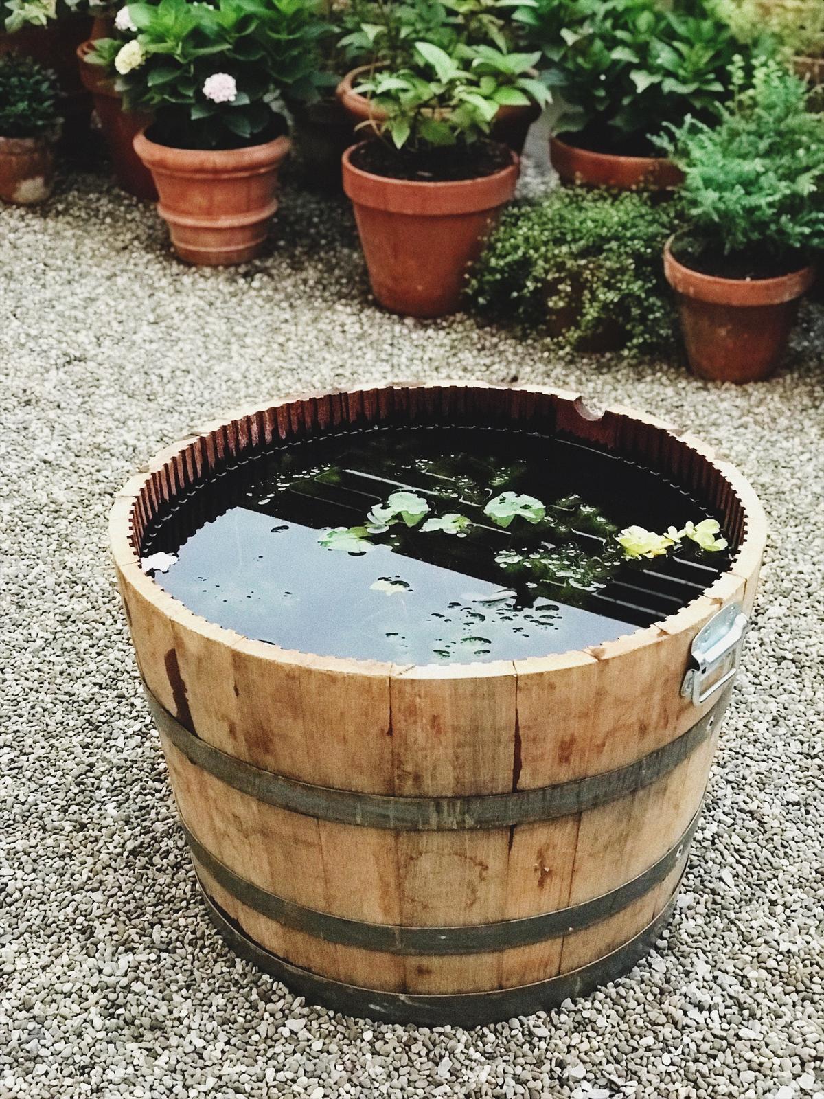Minijazierko vo vinovom sude - Obrázok č. 14