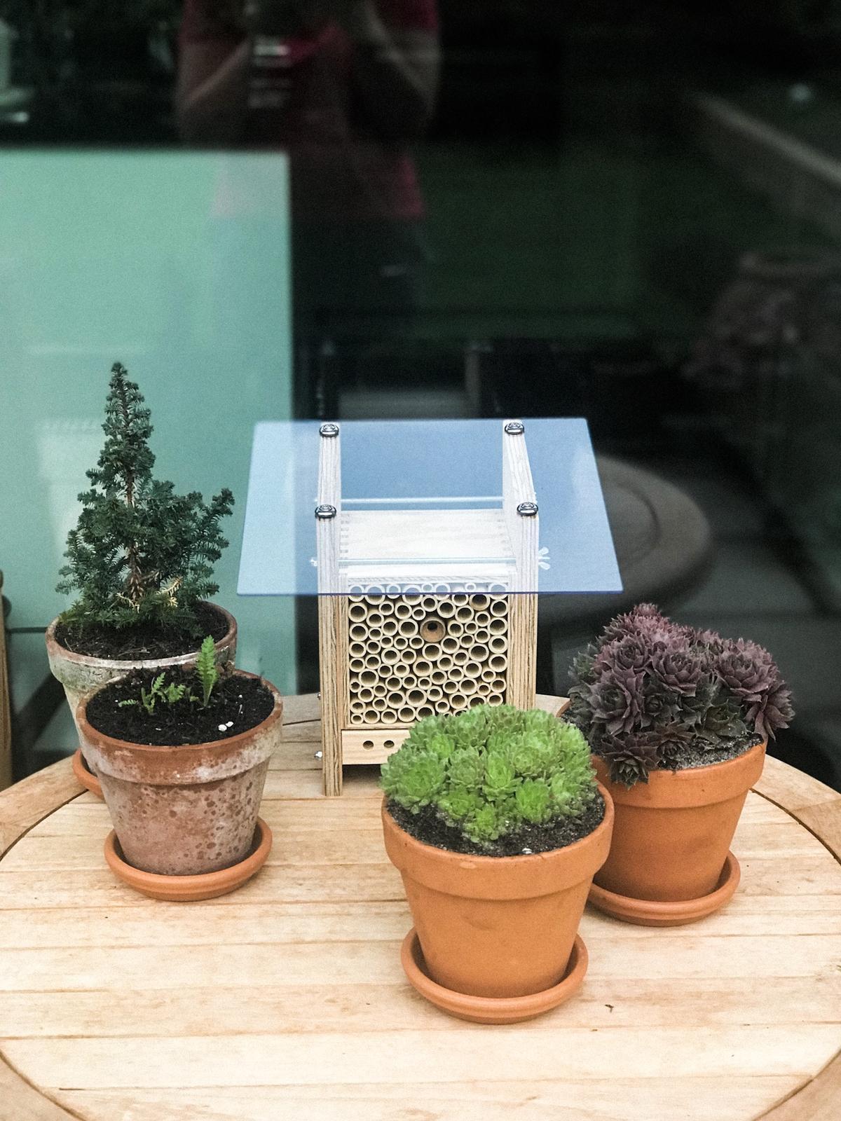 Terasa+ zahrada vzadu.. - Novy hotel pre hmyz 😍 so suflikom na ktorom je plexisklo, bude tam videt cely proces ako sa z vajicka vyvija vcela 😍❤️