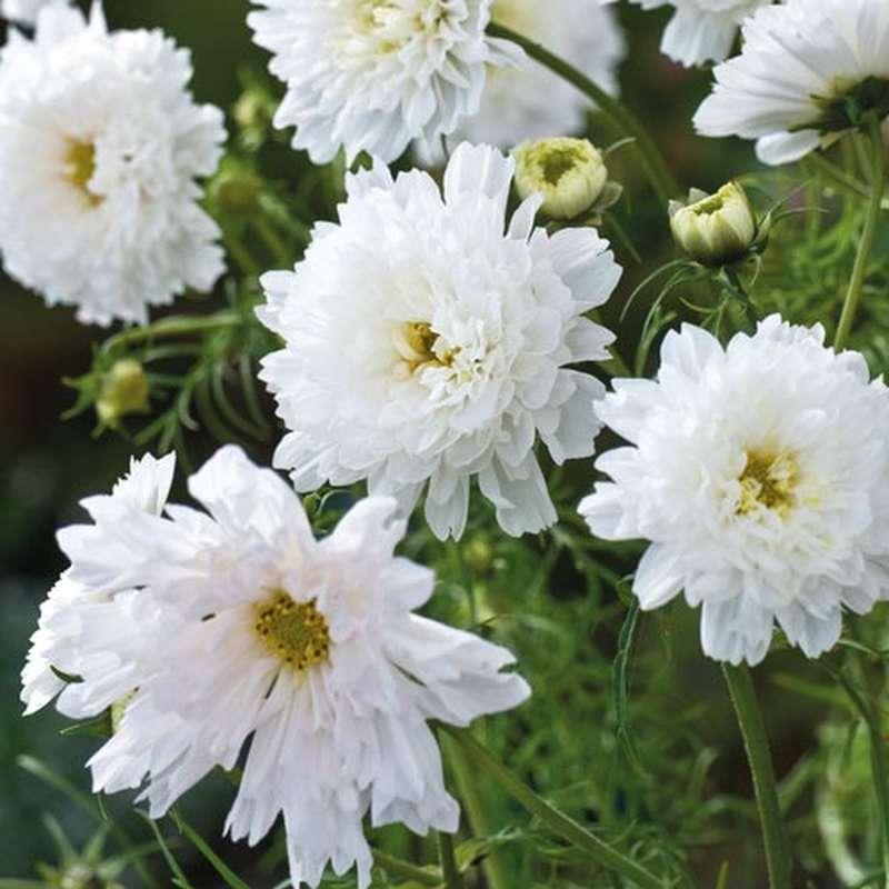 Kvety.. moja zahrada ich bude preplnena :-D - objednane
