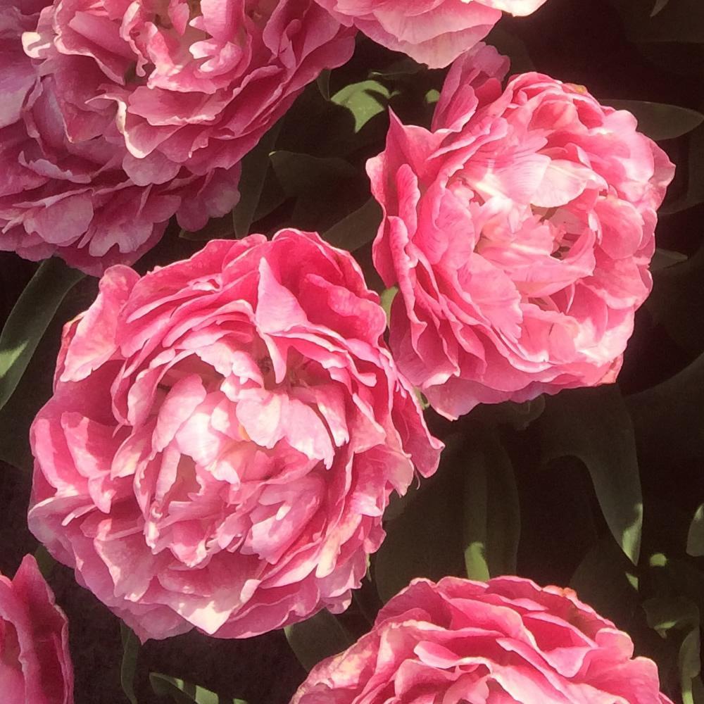 Moja kvetinova farma  :-) - thinkpink