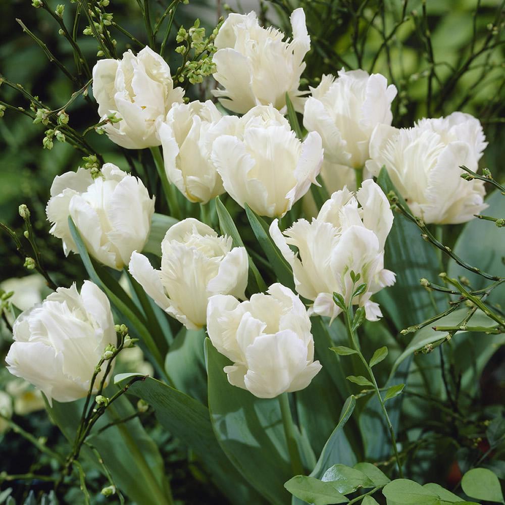 Moja kvetinova farma  :-) - white rebel