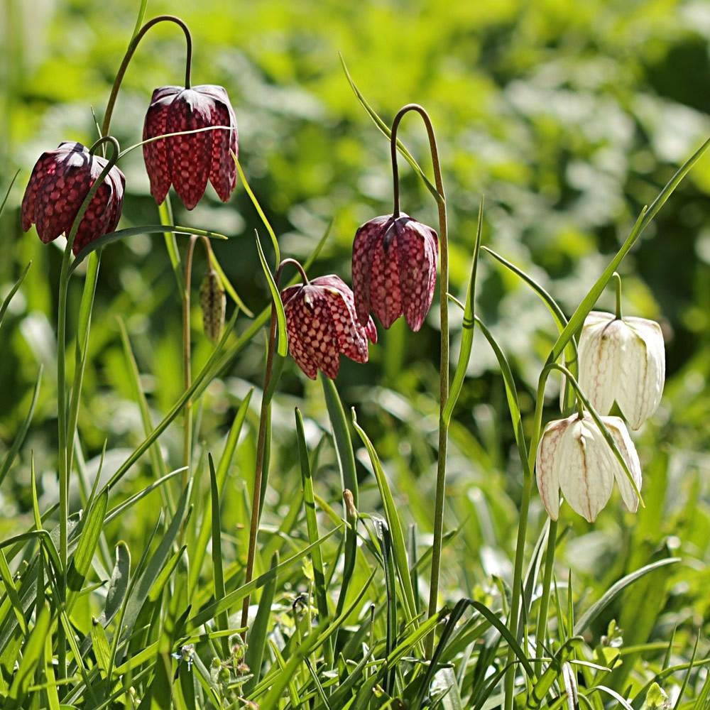 Moja kvetinova farma  :-) - Obrázok č. 75