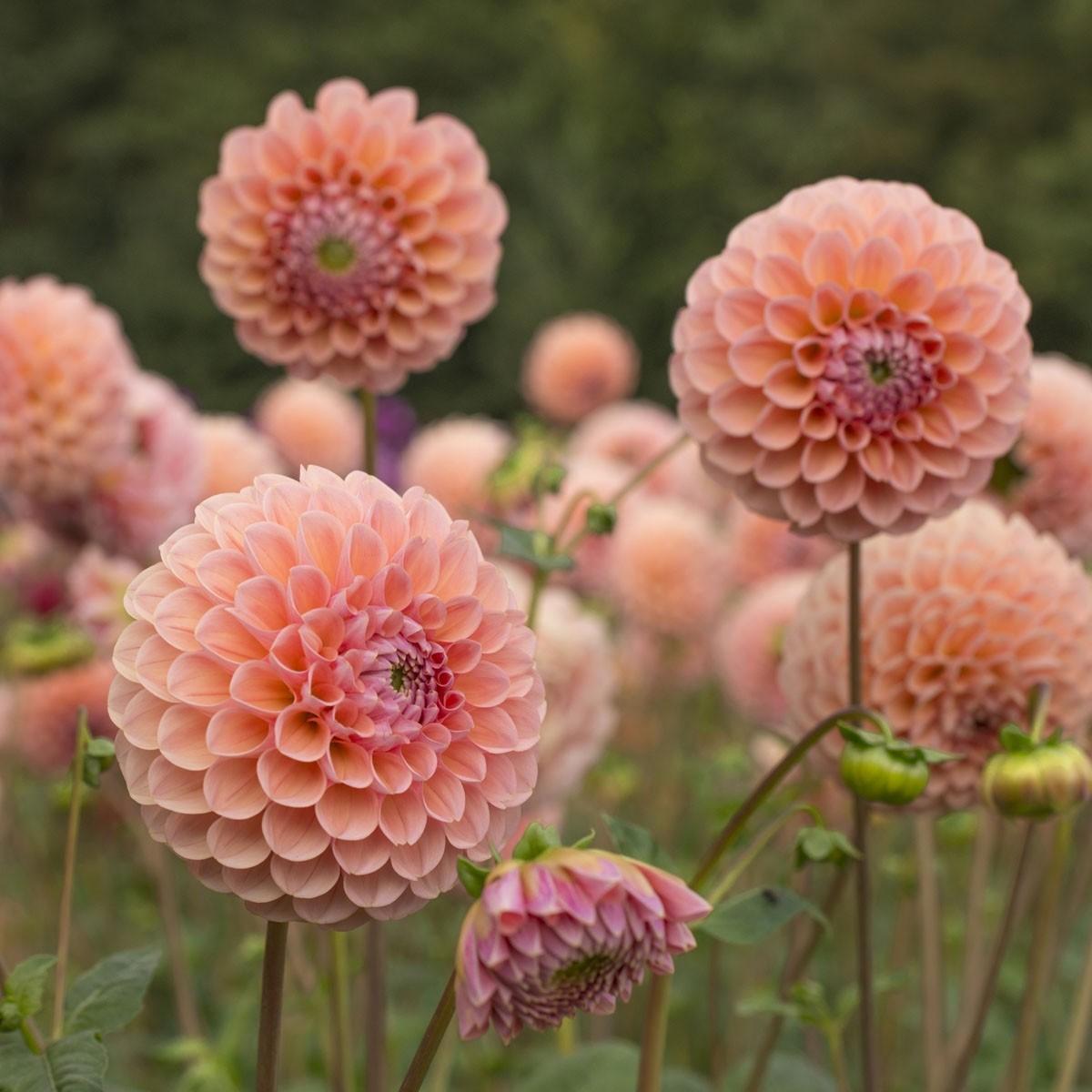 Moja kvetinova farma  :-) - Obrázok č. 37